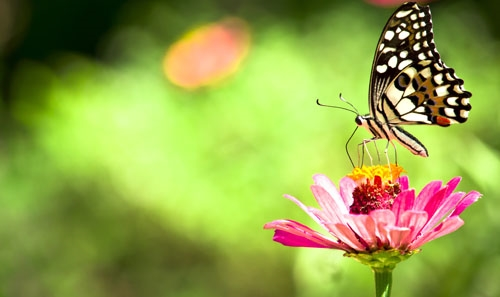 green background with butterfly on pink flower