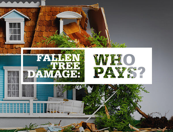 <p>Fallen Tree Damage&#8212;Who Pays?</p>