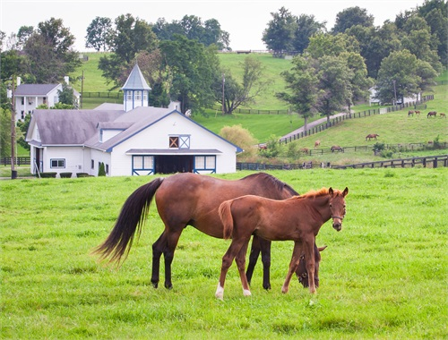 <strong>Equine Farm Insurance</strong>