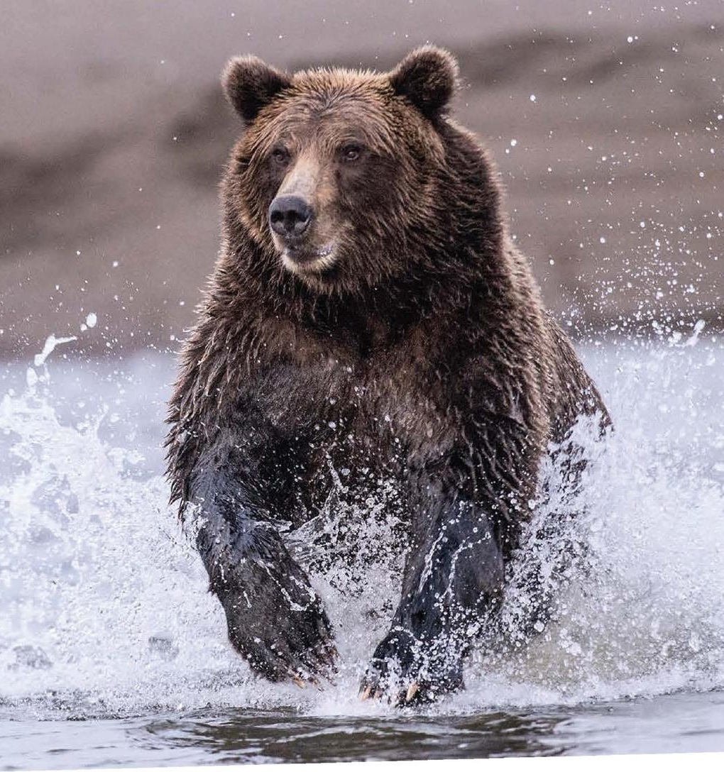 Bear Market. Now What?