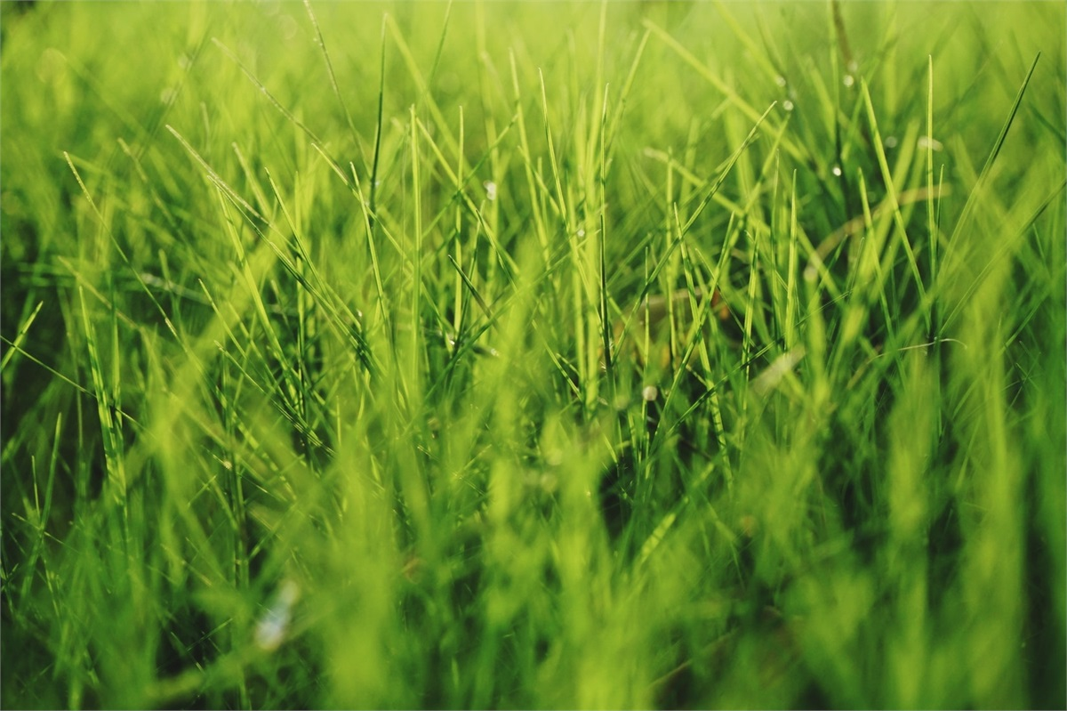Let's Keep Our Lawns and Ourselves Safe