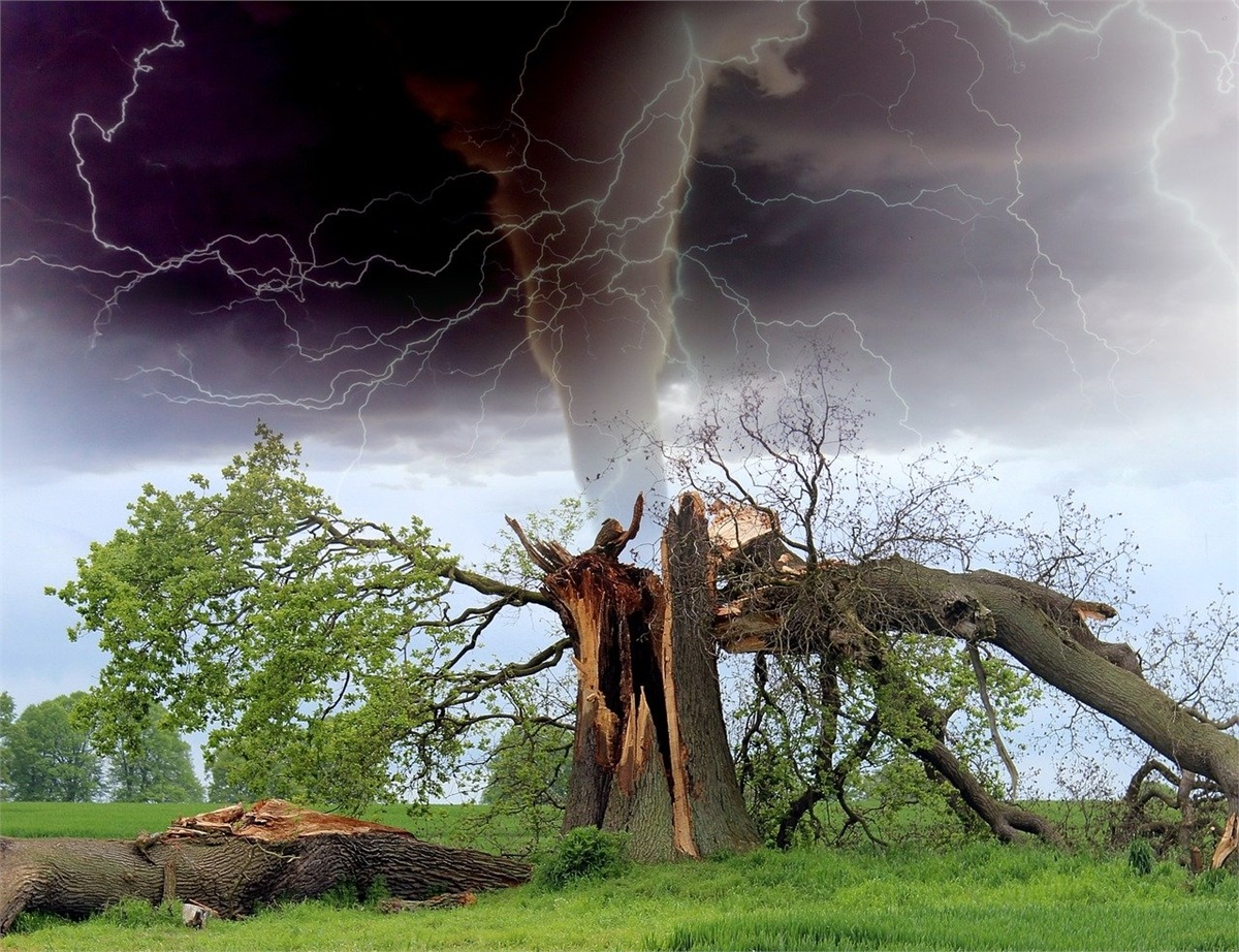 Who's Liable if a Tree Falls on a Home or Car?