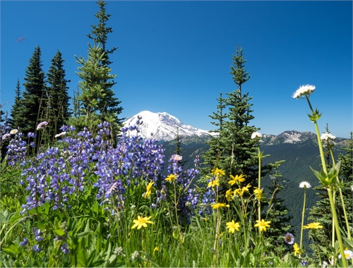 Mt. Rainier from Crystal Mountain - hiking and awestruck at the vistas