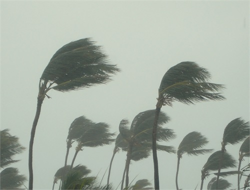 Hurricane Disaster Preparedness