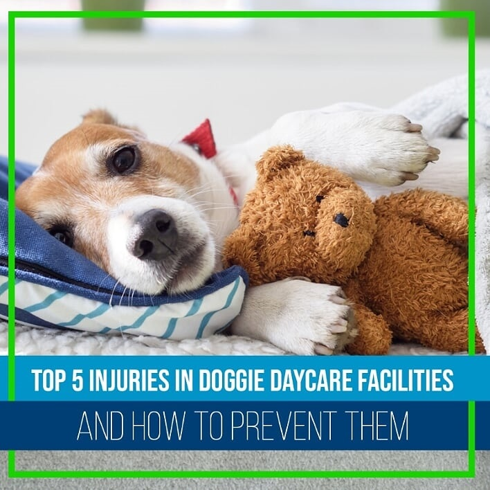Top 5 injuries in Doggie Daycare Facilities and How to Prevent Them