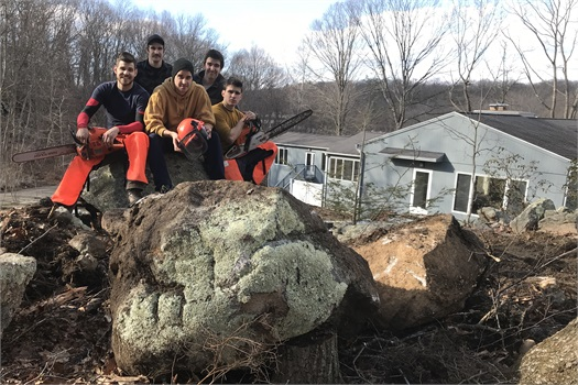 AAA's sons were instrumental in the removal of over 25 trees from the property.