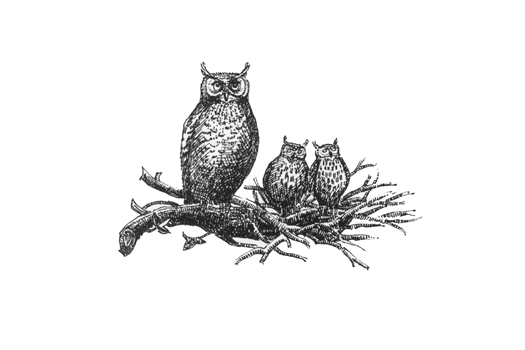 <strong>Why the Owl??</strong>