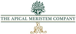 The Apical Meristem Company  Home