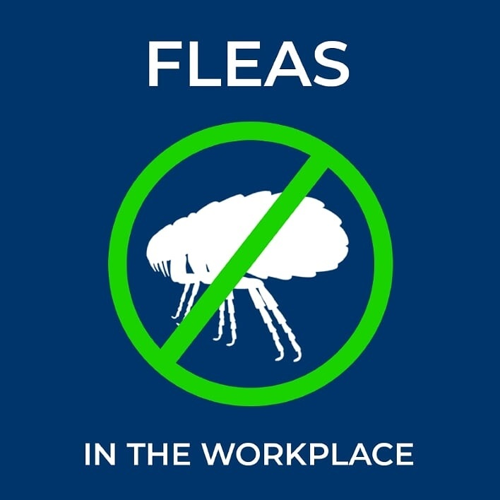 Fleas In The Workplace