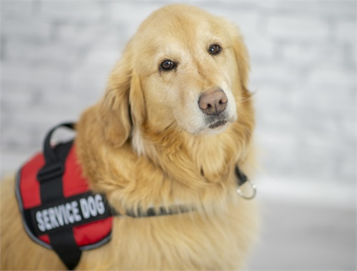 NEADS® World Class Service Dogs