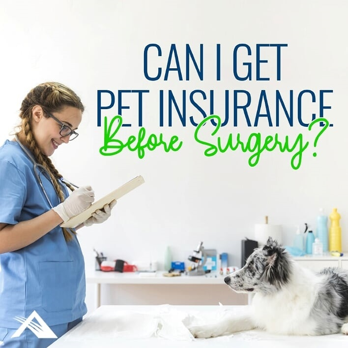 Can I Get Pet Insurance Before Surgery?
