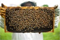 Protect Your Beekeeping Operation Against Yield Decline
