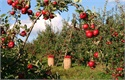 Where Is The Best Place to Go Apple Picking?