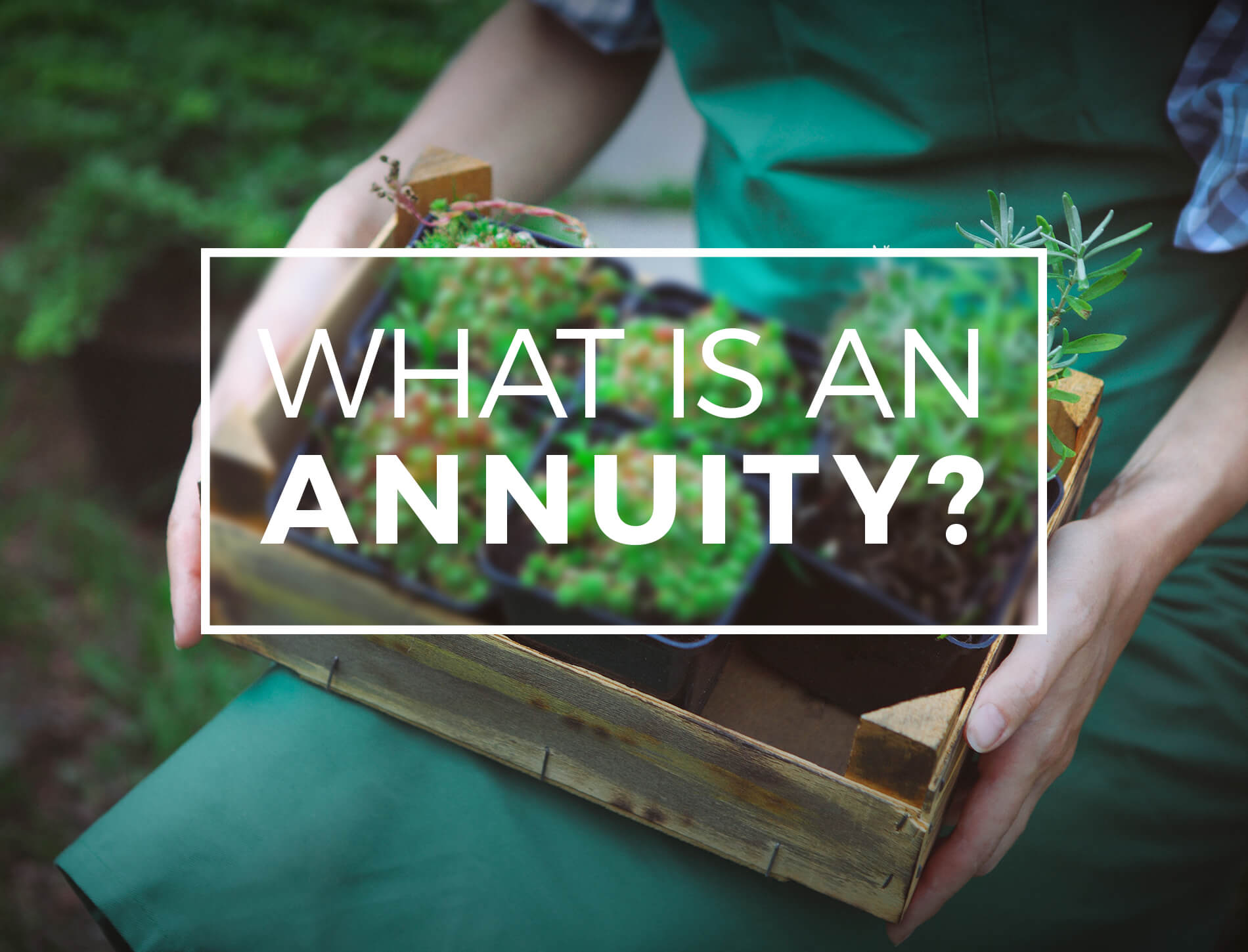 <p>What Is an Annuity?</p>