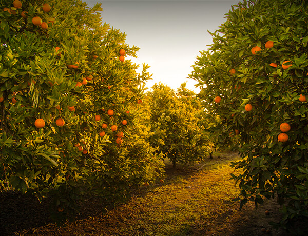 <p>Taxable vs. Tax-Deferred Savings</p>